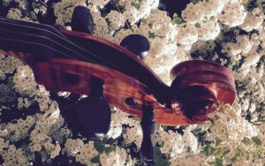 Cello- und Klavierunterricht in Kassel